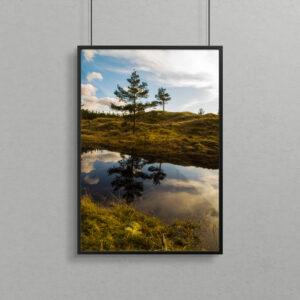 Billede af skovsø